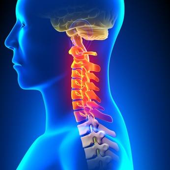 首のカーブが崩れることで症状が発生します